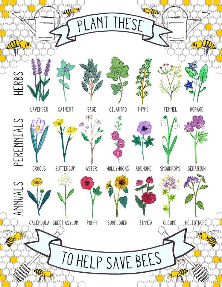 ... Peeking Around The Corner, With The Warm Weather And Sunshine Everyone  Is Probably Planning Their Gardens! When Planning Remember Our Friends The  Bees!
